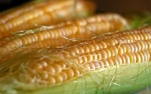 Các món ăn ngon từ bắp ngô