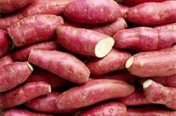 Bị bệnh thận không nên ăn khoai lang