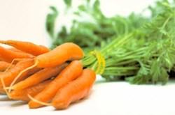 Cà rốt giúp giảm nguy cơ mắc bệnh ung thư tuyến tiền liệt