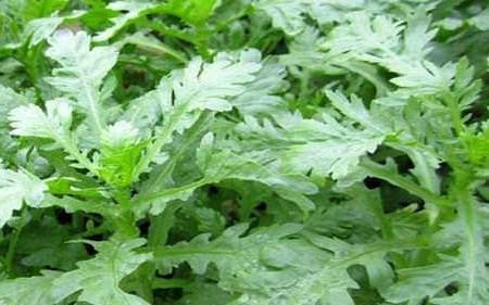 Các loại rau ăn giúp hạ huyết áp