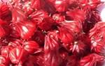 Atiso đỏ giúp thải độc cho gan
