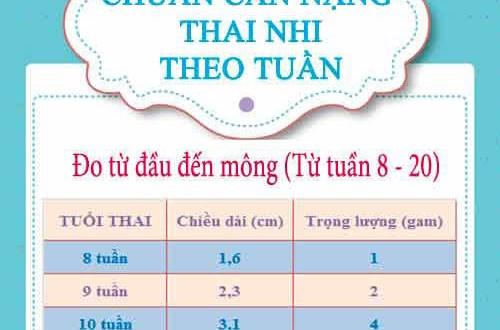 Cách chuẩn đoán cân nặng, chiều cao của thai nhi theo từng tuần
