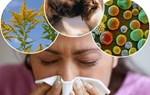 Cách giúp người viêm xoang dễ chịu hơn