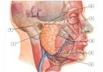 Biểu hiện của bệnh ung thư tuyến nước bọt
