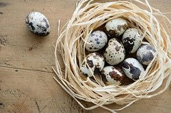 Tác dụng của trứng chim cút