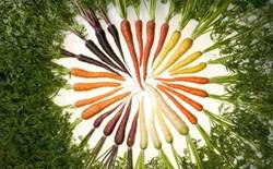 Những chú ý khi chế biến, ăn cà rốt