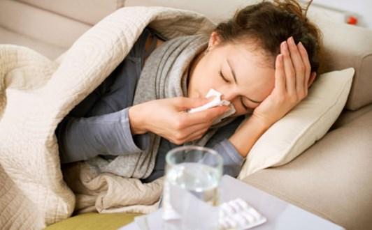 Lá tía tô chữa cảm cúm rất hiệu quả