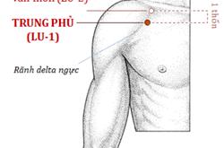 Bấm huyệt Trung phủ giúp trị các bệnh về hô hấp