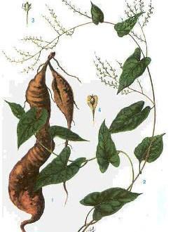 Bài thuốc Đông y chữa khô da trong mùa đông