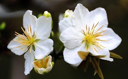 Bài thuốc chữa mất ngủ từ các loại hoa