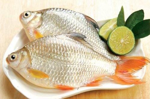 Vị thuốc từ cá diếc