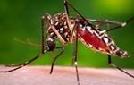 Bệnh sốt xuất huyết, triệu chứng và cách điều trị