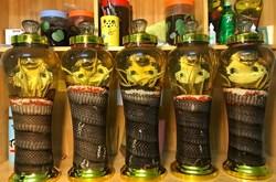 Bài thuốc chữa bệnh các bộ phận của con rắn