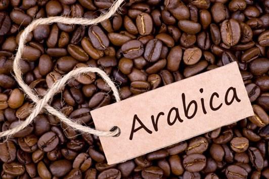 Phân biệt các loại, giống cà phê phổ biến