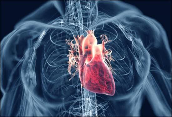 Thời điểm dễ phát sinh bệnh tim