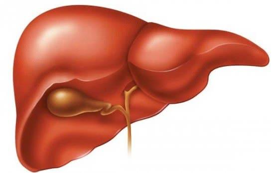 Gan, dấu hiệu nhận biết bệnh gan sớm