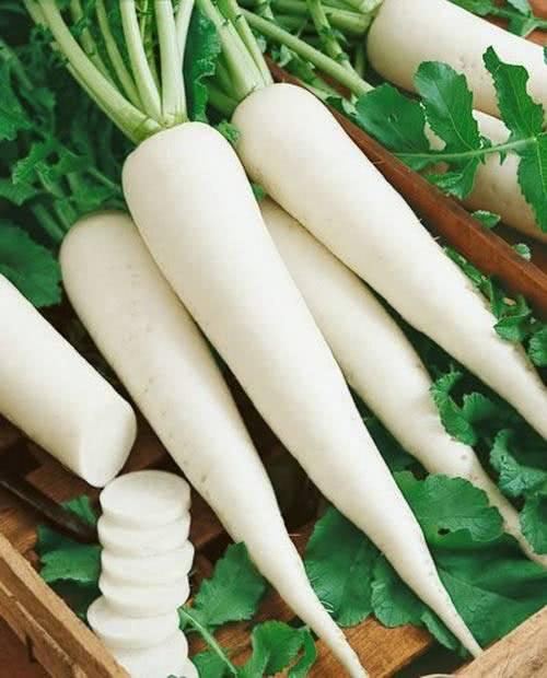 Củ cải trắng chữa ho cho trẻ