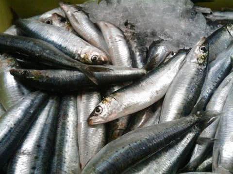 Cá trích, người bị gout không nên ăn cá trích