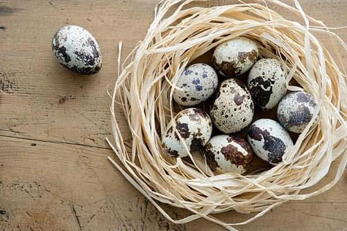 Quả trứng cút, tác dụng của trứng cút