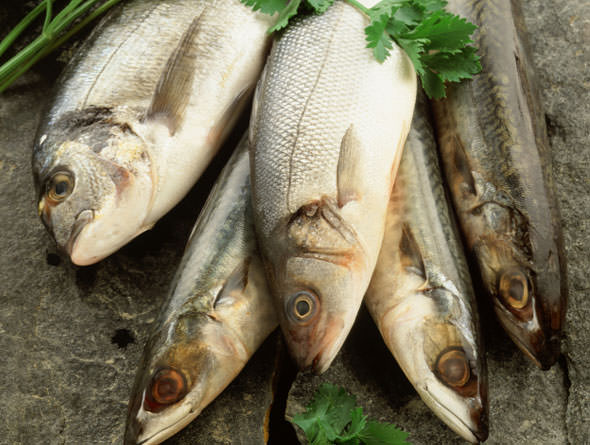 Cá chứa nhiều Omega-3