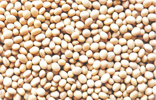 hạt đậu tương